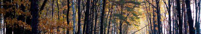 冬の森004