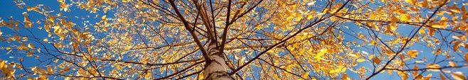 冬の森012
